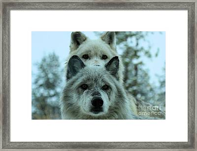 Curiosity Framed Print by Adam Jewell