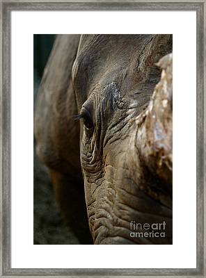 Curiosity Framed Print by Alison Kennedy-Benson