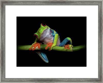 Curiosity Framed Print by Ferdinando Valverde