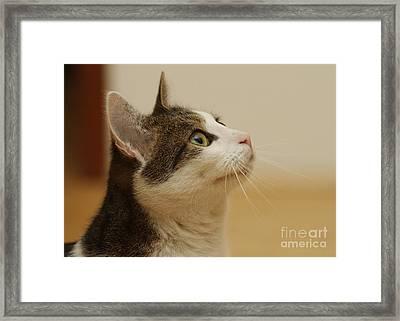 Curious Cat Framed Print by Brinkmann/Okapia