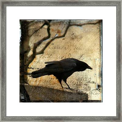 Curious Crow Framed Print by Gothicolors Donna Snyder