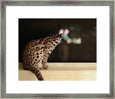 Curious Cub Framed Print by Laura Fasulo
