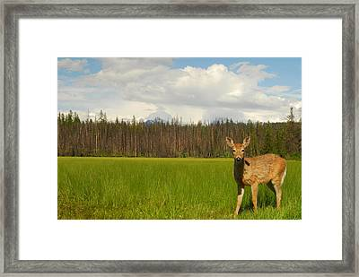 Curious Deer In Glacier National Park Framed Print by Larry Moloney