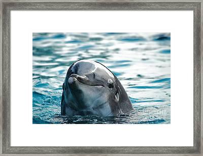 Curious Dolphin Framed Print by Mariola Bitner