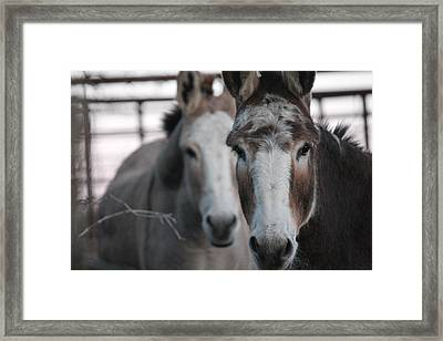 Curious Donkeys Framed Print by Lorri Crossno