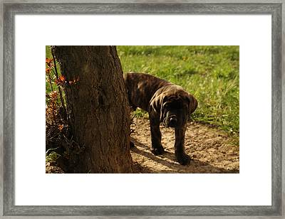Curious Framed Print by Jeff Swan