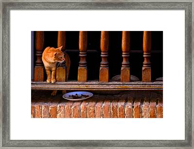 Curious Kitty Framed Print by Ricardo J Ruiz de Porras