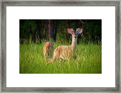 Curious Framed Print by Linda Unger