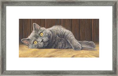 Curious Max Framed Print by Lucie Bilodeau