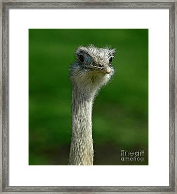 Curious Framed Print by Nick  Boren