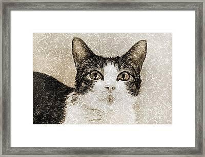 Curious State Of Wonder Framed Print by Andee Design