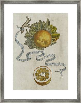 Curled Leaf Orange Framed Print by Cornelis Bloemaert