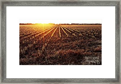 Cut Bean Field Framed Print by Scott Pellegrin