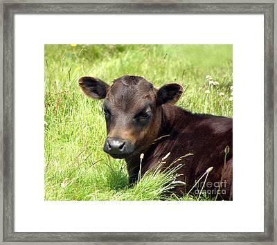 Cute Cow Framed Print by Terri Waters