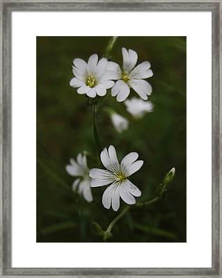 Cute Flowers Framed Print by Gynt