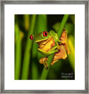 Cute Green Frog Framed Print by Anna Om