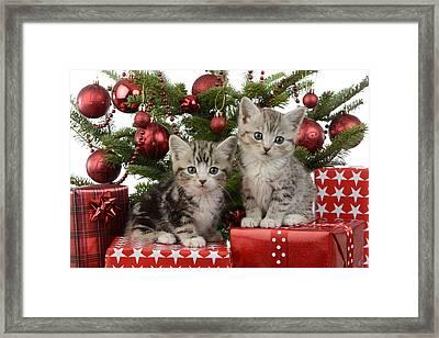Cute Kitten Xmas Presents Framed Print by Greg Cuddiford