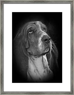 Cute Overload - The Basset Hound Framed Print by Christine Till