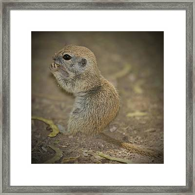 Cute Prairie Dog Framed Print by Melanie Viola
