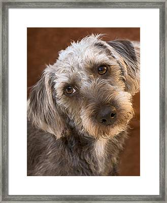 Cute Pup Framed Print by Natalie Kinnear