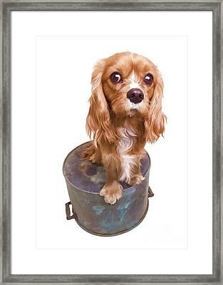Cute Puppy Card Framed Print by Edward Fielding