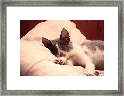 Cute Sleeping Kitten Framed Print by Tilen Hrovatic