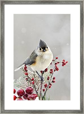 Cute Winter Bird - Tufted Titmouse Framed Print by Christina Rollo