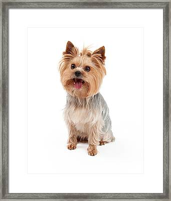 Cute Yorkshire Terrier Dog Sitting Framed Print by Susan  Schmitz