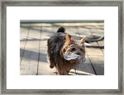 Cutest Dog Ever - Animal - 011310 Framed Print by DC Photographer