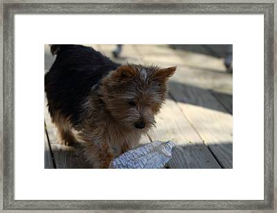 Cutest Dog Ever - Animal - 011311 Framed Print by DC Photographer