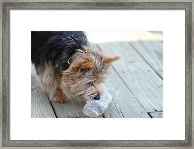Cutest Dog Ever - Animal - 011314 Framed Print by DC Photographer