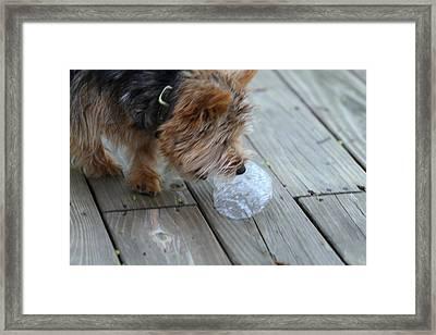 Cutest Dog Ever - Animal - 011315 Framed Print by DC Photographer