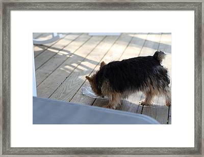 Cutest Dog Ever - Animal - 01132 Framed Print by DC Photographer