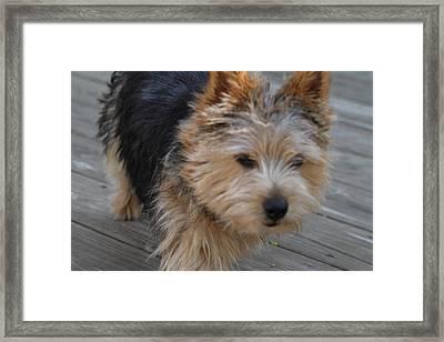 Cutest Dog Ever - Animal - 011328 Framed Print by DC Photographer