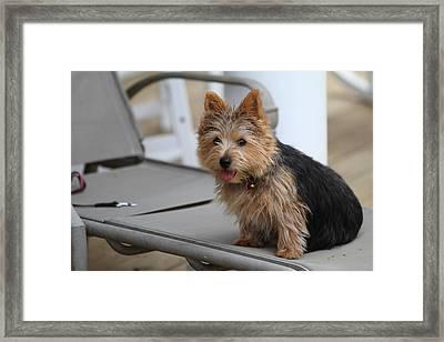 Cutest Dog Ever - Animal - 011334 Framed Print by DC Photographer