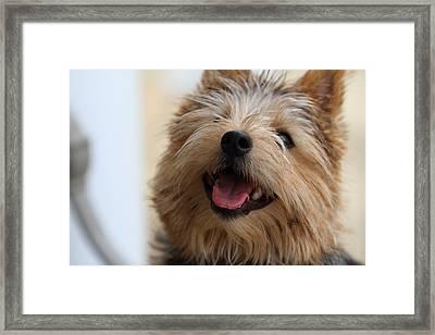 Cutest Dog Ever - Animal - 011337 Framed Print by DC Photographer