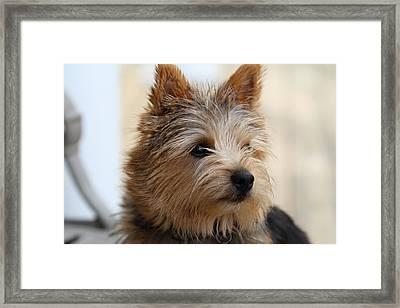 Cutest Dog Ever - Animal - 011338 Framed Print by DC Photographer