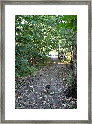 Cutest Dog Ever - Animal - 011352 Framed Print by DC Photographer