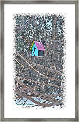 Cutest Little Birdhouse Framed Print by Donna Brown