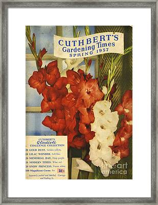 Cuthbert�s Gardening Times 1957 1950s Framed Print by The Advertising Archives