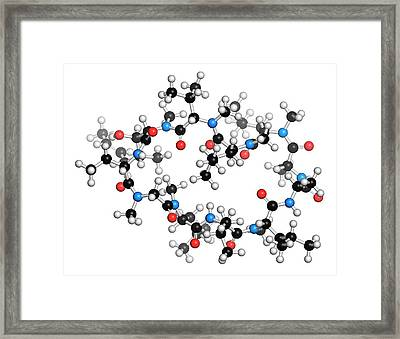 Cyclosporine Immunosuppressant Drug Framed Print by Molekuul