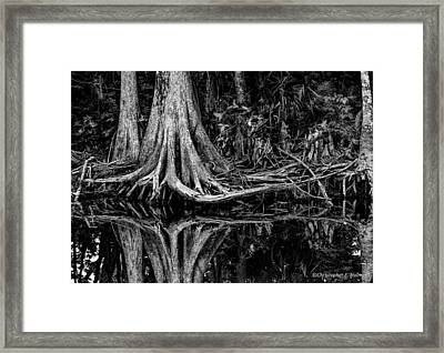 Cypress Roots - Bw Framed Print by Christopher Holmes