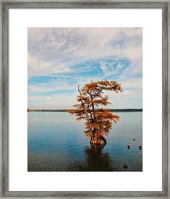 Cypress Tree In Autumn I Framed Print by Jai Johnson