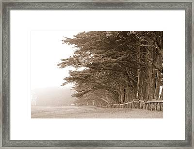 Cypress Trees Along A Farm, Fort Bragg Framed Print by Panoramic Images