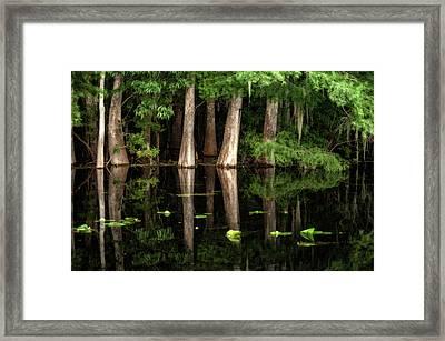 Cypress Trees In Suwanee River Framed Print by Sheila Haddad