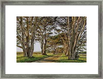 Cypress Tunnel Framed Print by Robert Rus