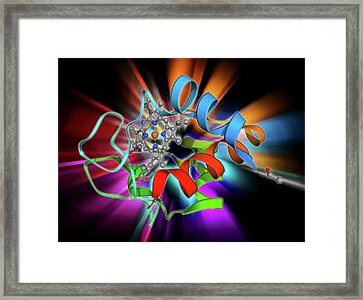 Cytochrome C Framed Print by Laguna Design