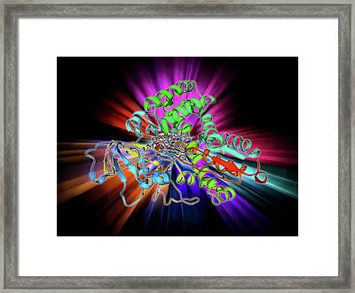 Cytochrome P450 Framed Print by Laguna Design