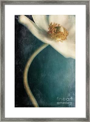 Dense Woods Framed Print by Priska Wettstein