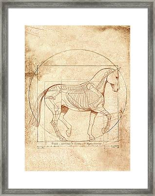 da Vinci Horse in Piaffe Framed Print by Catherine Twomey